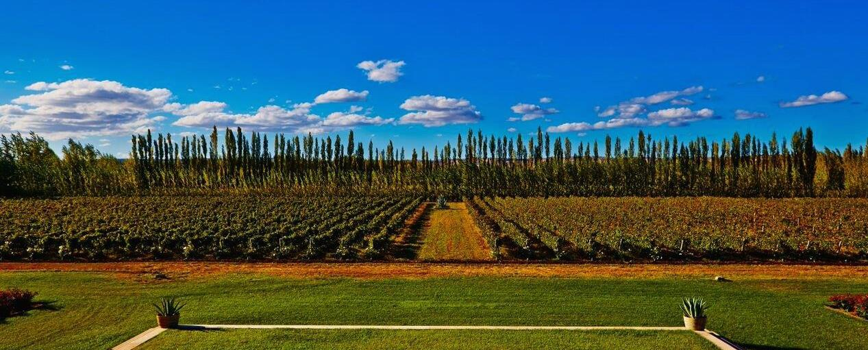 Cinq wines- Vinos en Guatemala- Bodega la chacra