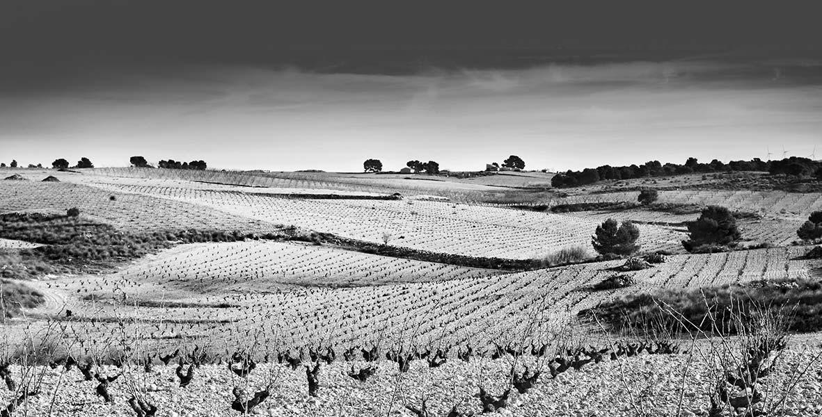 Cinq wines- vinos en Guatemala- Bodega Juan Gil