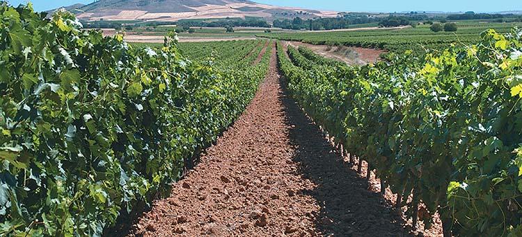 Cinq wines- bodegas hermanos perez pascuas