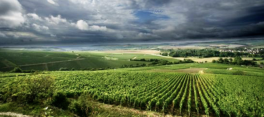 Cinq wines- vinos en Guatemala- Chateau joseph drouhin
