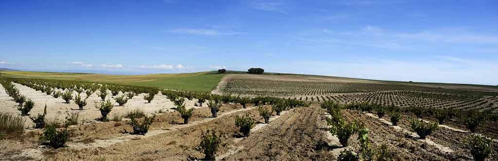 Cinq wines- Vinos en Guatemala- bodega shaya 1