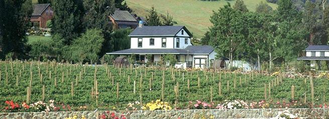 Cinq wines - vinos de california - cline cellars
